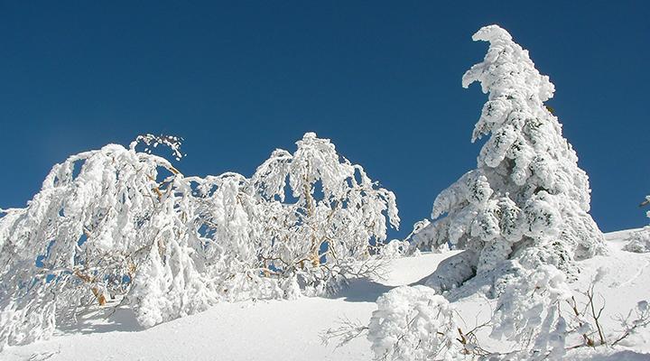 山スキー 初心者