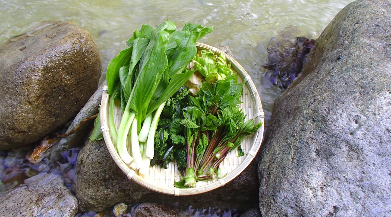 沢登り 山菜