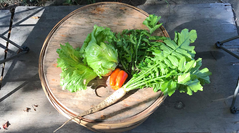 安曇野 野菜